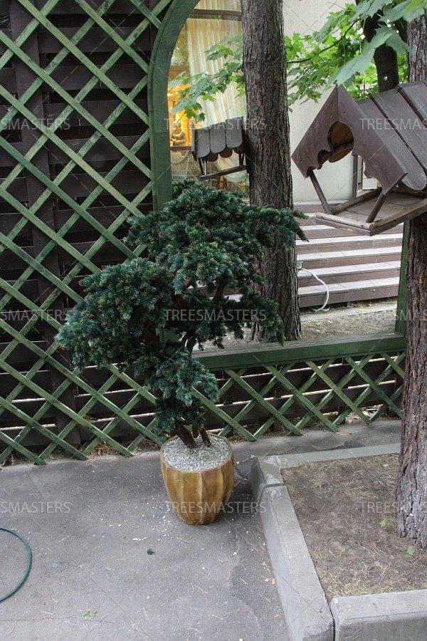 Крупномерный бонсай: Искусственная сосна 1.8м