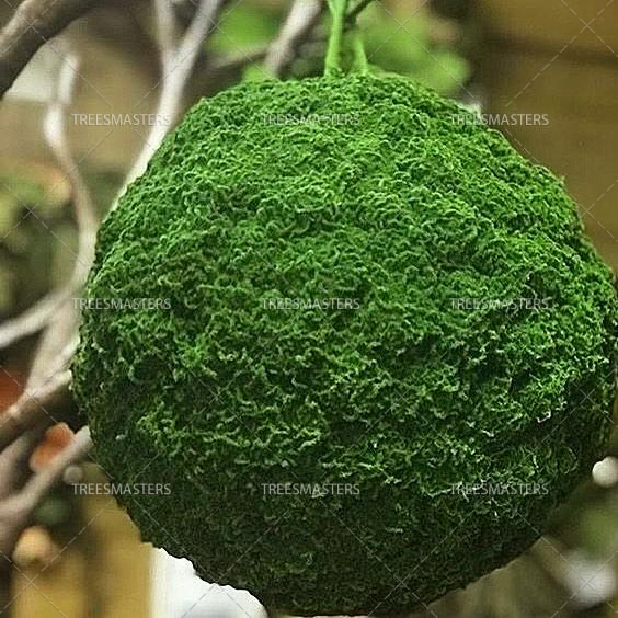 Искусственный мох собственного производства TreesMasterShop