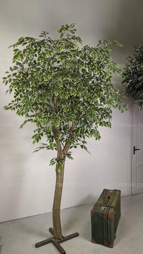 Искусственное дерево, Фикус