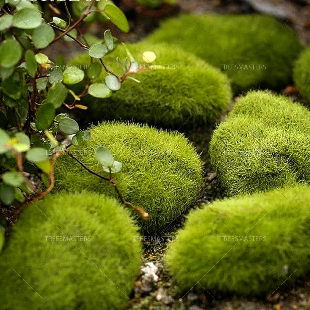 Искусственный мох кочками