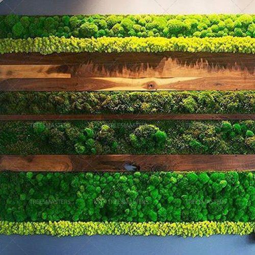Комбинированный мох в настенной композиции