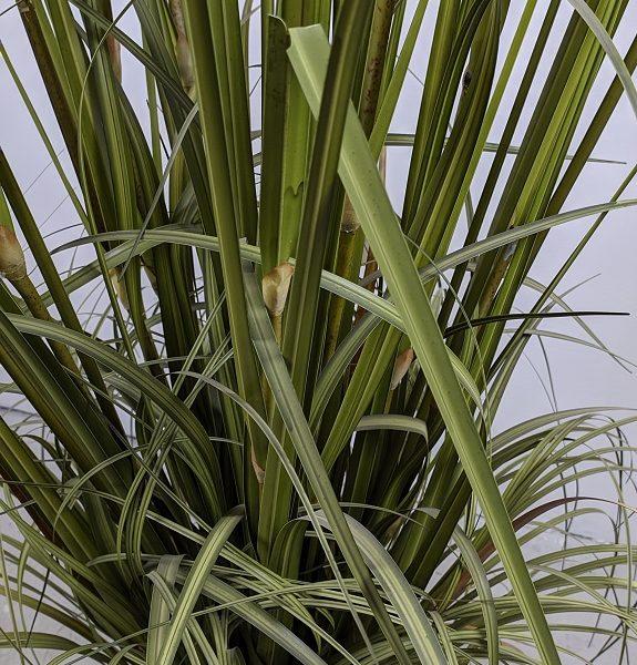 Куст искусственной травы, 100-150см