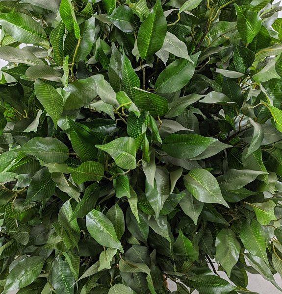 Искусственное дерево: Фикус шаровидный, 50-200см