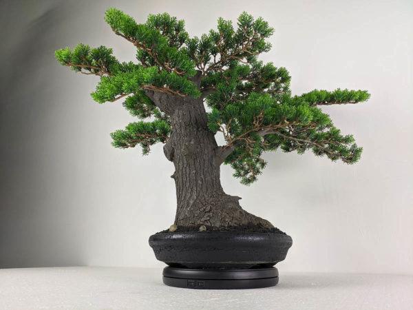 Искусственный бонсай, хвойное настольное дерево, 70см