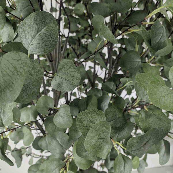 Листья искусственного эвкалипта