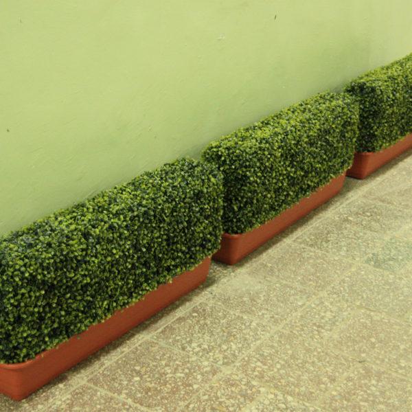 Искусственный самшит, средние блоки, 50-250 см