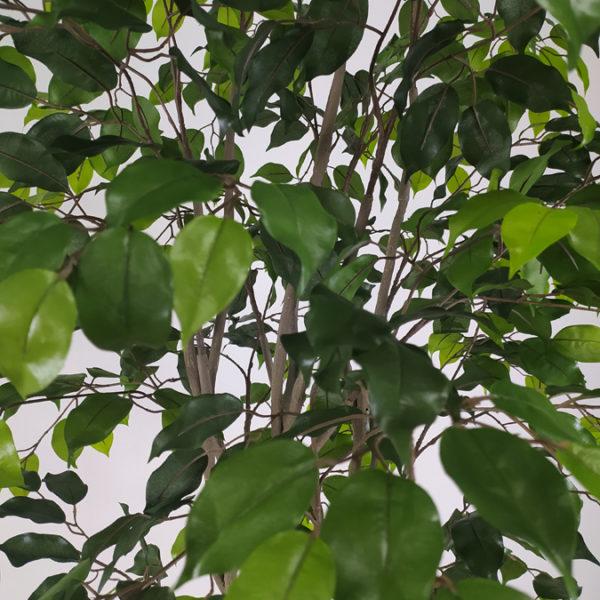 Искусственный зелёный Фикус, 200см